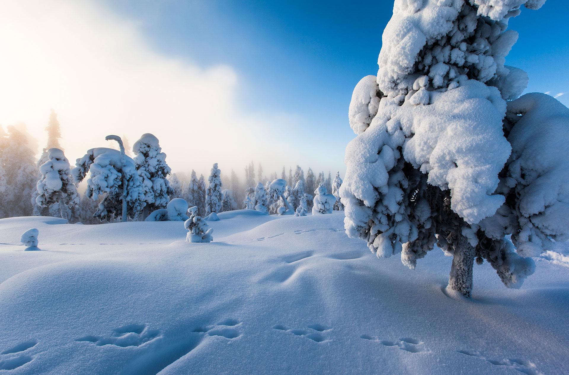 Visit Rovaniemi Winter copyright Visit Rovaniemi