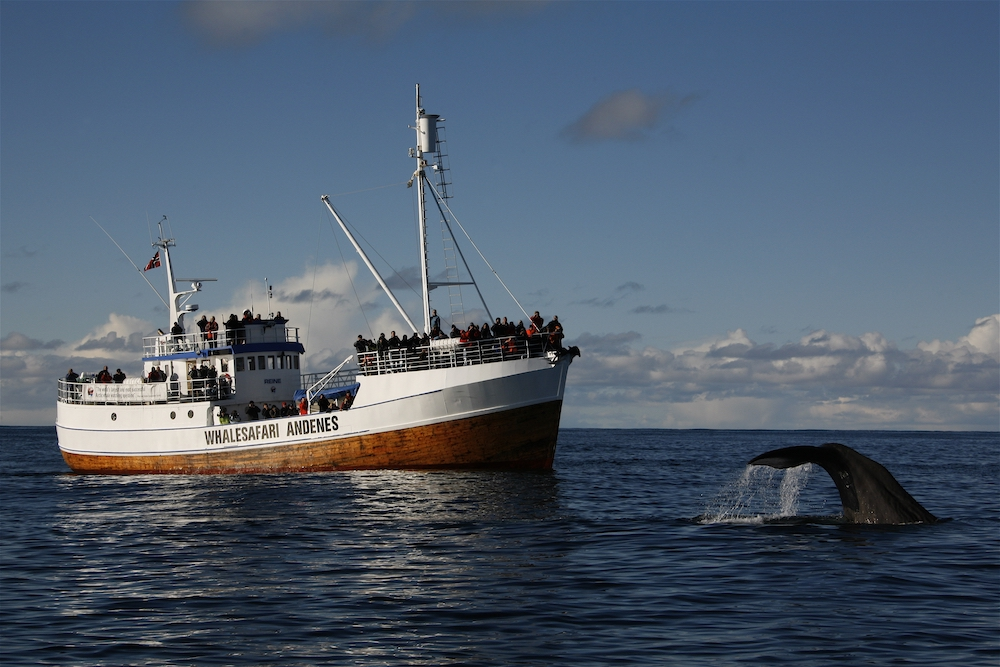VAE Norway Hvalsafari Andenes Rein with whale ©Whalesafari Andenes