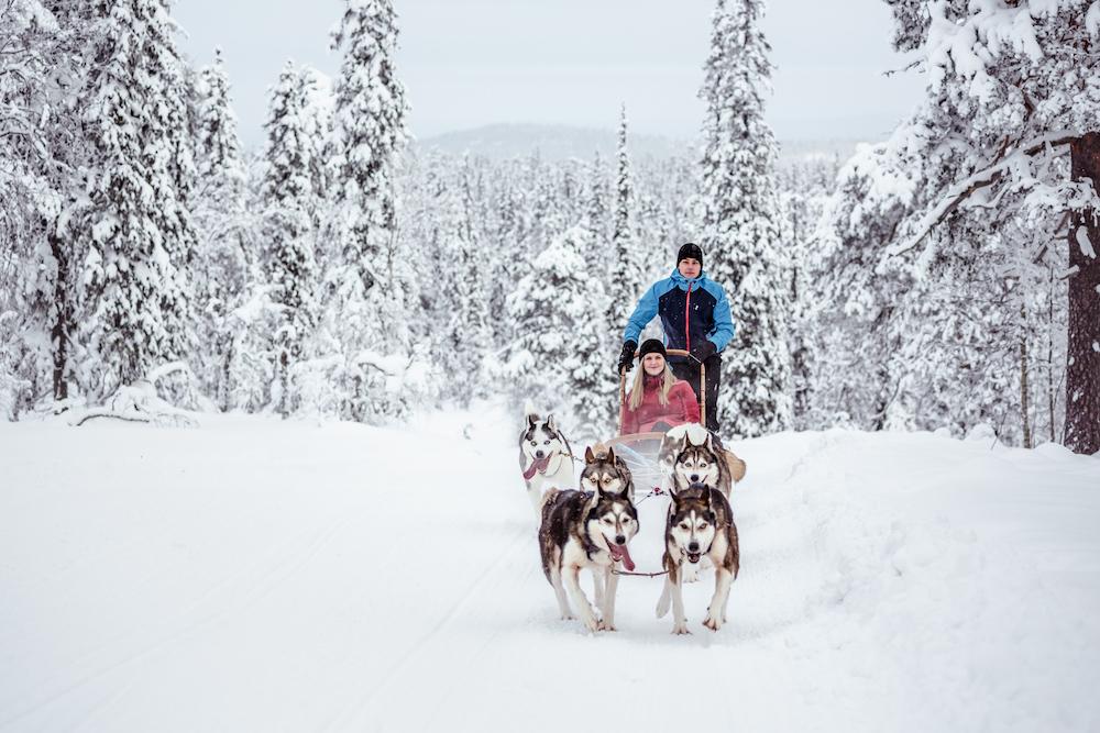 VAE Visit Pyhä-Luosto Huskies © Visit Pyhä-Luosto